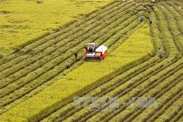 Đề xuất chính sách khuyến khích tích tụ đất đai sản xuất quy mô lớn