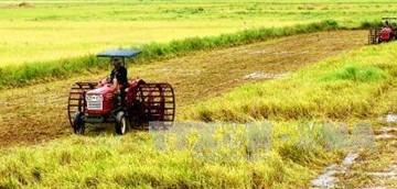 Cải cách ngành lúa gạo theo định hướng thị trường