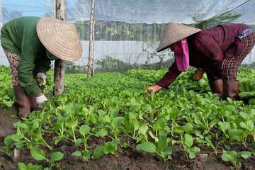 Nông nghiệp hữu cơ tăng diện tích 3,6 lần sau 5 năm