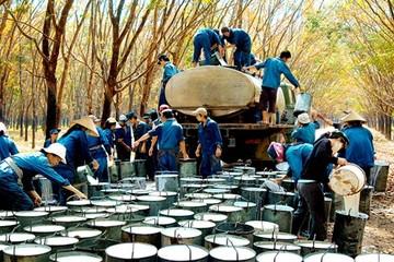 7 tháng đầu năm kim ngạch xuất khẩu cao su của Việt Nam tăng 58,4%