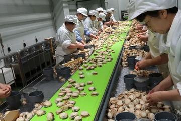 Vì sao ngôi làng giàu nhất nước Nhật có thể sẽ mất nghề kiếm bộn tiền?