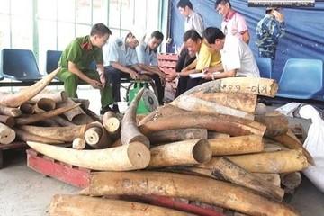 Việt Nam: Điểm nóng trên bản đồ ngà voi