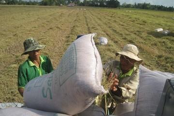 Rất ít doanh nghiệp nhận được hỗ trợ đầu tư vào nông nghiệp