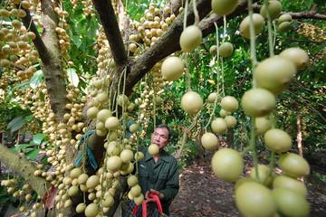 Nghị quyết trung ương 5: Nông nghiệp Việt mất dần giống
