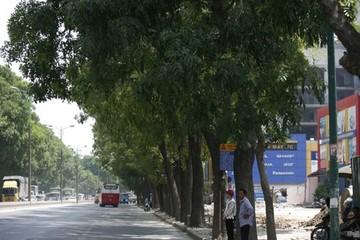 Hà Nội sắp chặt hạ, chuyển 1.300 cây trên đường Phạm Văn Đồng