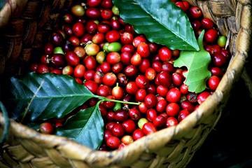 Thời tiết xấu ở Việt Nam và Brazil đẩy giá cà phê tăng vọt