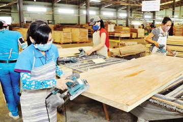TTF tăng vốn thêm 1.000 tỷ đồng và cân nhắc bán rừng để khắc phục việc hủy niêm yết
