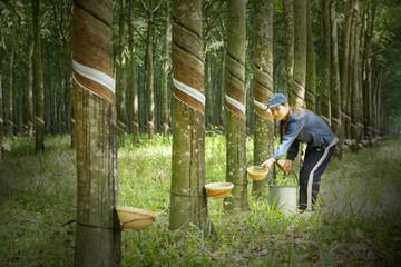 Thanh lý vườn cây cao su PHR lãi ròng 246 tỷ đồng trong 9 tháng, tăng 88% cùng kỳ