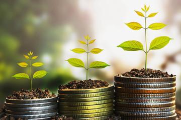 Mảng điện-than đẩy lợi nhuận REE tăng gấp đôi lên hơn 1.100 tỷ đồng, tiền cao kỷ lục