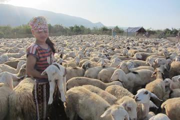 Thịt cừu Ninh Thuận được bảo hộ chỉ dẫn địa lý