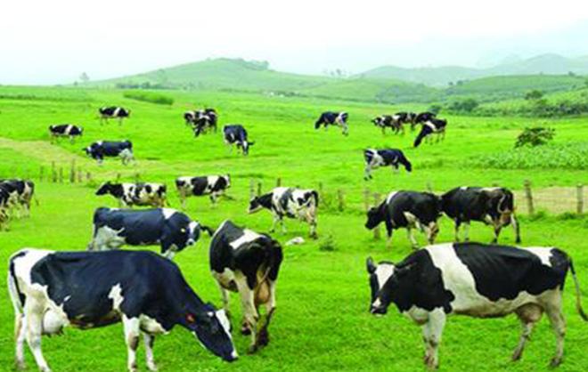 GTNFoods dự kiến tăng sở hữu tại Vilico và sữa Mộc Châu