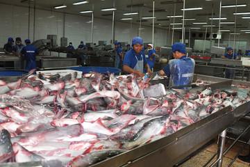Hàng khan hiếm khiến cá tra tăng giá lỷ lục