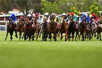 Golden Horse thúc đẩy dự án trường đua ngựa 500 triệu USD tại Bắc Ninh