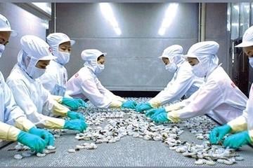 Hàng loạt lô hàng tôm Minh Phú bị Mỹ từ chối vì kháng sinh