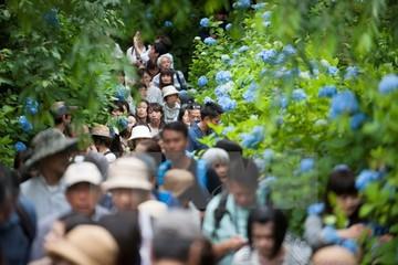 Việt Nam đứng đầu Đông Nam Á về tăng trưởng du khách tới Nhật Bản