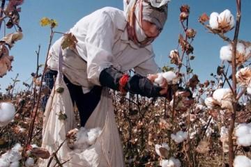 Uzbekistan - nền kinh tế cô độc muốn tìm lại hào quang