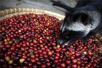 Reuters: Sẽ dư thừa cà phê trong niên vụ 2018 – 2019