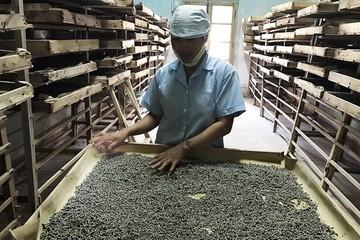 Nỗi lo ngành tơ tằm phụ thuộc nước ngoài