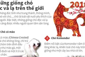 [Infographics] Những giống chó độc và lạ trên thế giới