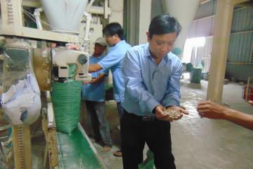 Xuất khẩu bã mía, cùi bắp… thu tiền tỉ