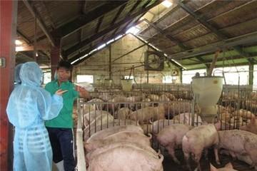 Lại lo chăn nuôi vỡ trận