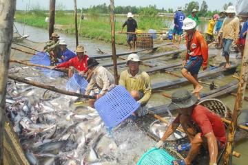 Mỹ sắp thanh tra thực tế cá da trơn Việt Nam
