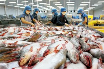 Bộ Công Thương: Mức thuế cá tra- basa mà Mỹ đưa ra mang tính bảo hộ quá mức