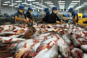 """Xuất khẩu hải sản Việt Nam sẽ mất gần nửa tỷ USD/năm nếu bị EU rút """"thẻ đỏ"""