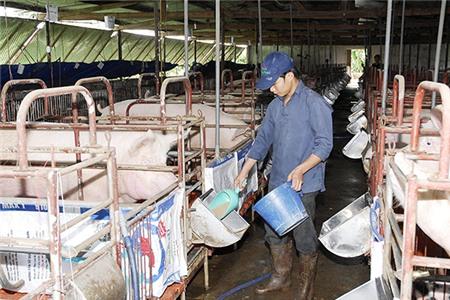 """Chăn nuôi Việt Nam """"làm lại từ đầu"""""""