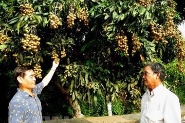 Triển vọng xuất khẩu trái cây Việt Nam đạt kim ngạch 10 tỷ USD