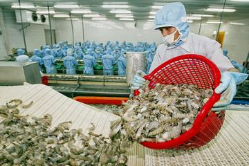 Xuất khẩu tôm tăng trưởng mạnh những tháng đầu năm