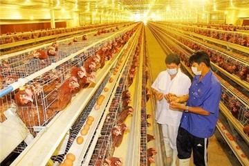"""Ngành chăn nuôi đã bớt """"sợ"""" CPTPP"""
