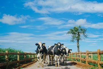 Vinamilk là thương hiệu được lựa chọn nhiều nhất Việt Nam 4 năm liên tiếp