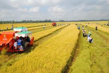 Chính phủ thúc đẩy tích tụ đất đai ở Thái Bình