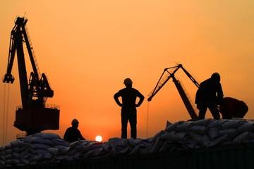 Người mua Trung Quốc bị thắt chặt nguồn cung cao lương Mỹ sau tranh chấp thương mại