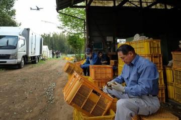'Cuộc chiến đất đai' giữa nông dân Nhật Bản và sân bay
