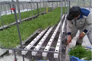 Nhiều mô hình sản xuất nông nghiệp hữu cơ cho thu nhập cao