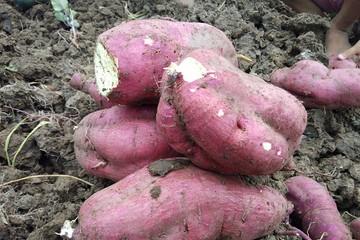 Tình trạng 'khủng hoảng thừa' nông sản: Nên luật hóa trách nhiệm trong dự báo thị trường