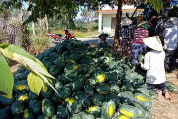 Những nông sản giá chạm đáy nửa đầu năm