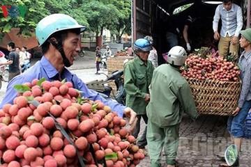 Vải thiều Bắc Giang đã được xuất khẩu sang trên 30 nước
