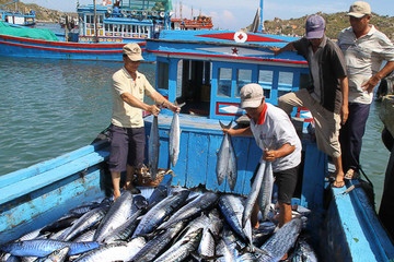 EU kéo dài thời hạn thẻ vàng hải sản thêm 6 tháng