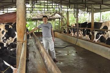 Vắt sữa bò ra... ô tô