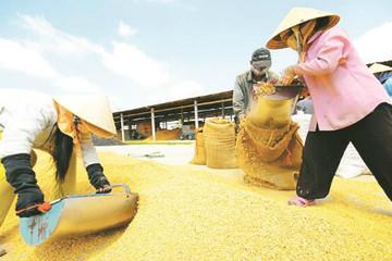 Thủ tướng đối thoại với doanh nghiệp đầu tư vào nông nghiệp