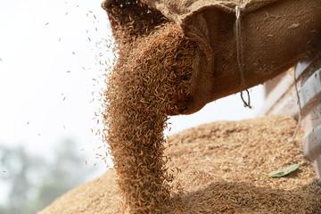 Thị trường gạo châu Á: Nguồn cung từ Thái Lan, Việt Nam sẽ tạo áp lực lớn