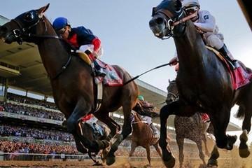 Phú Yên muốn mở trường đua ngựa, đua chó có cá cược
