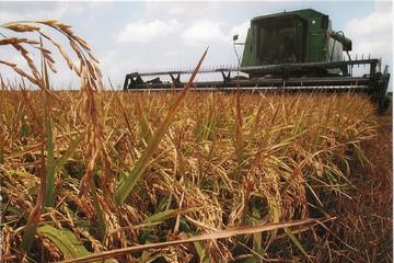 Thị trường gạo tuần này: Bớt áp lực vì nguồn cung hạn chế trong mùa mưa lũ