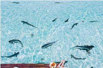 Những bức ảnh đẹp như cổ tích của tài khoản Instagram được hơn nửa triệu người theo dõi