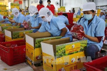 Cơ hội cho nông sản Việt Nam xuất khẩu sang thị trường EU