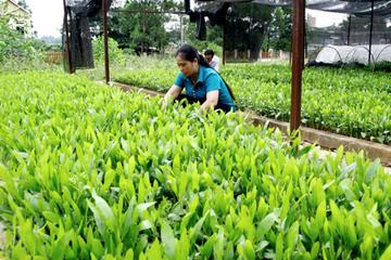 Đấu giá 96% vốn công ty sở hữu hơn 1.000ha đất lâm nghiệp
