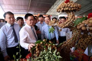 Trung Quốc sẽ là thị trường tiêu thụ trọng tâm của nhãn Việt Nam
